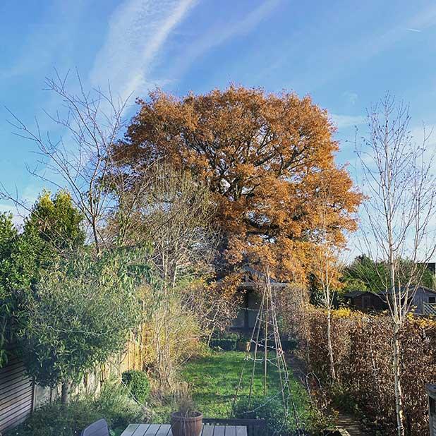 Autumn-in-garden